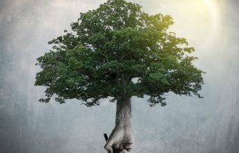 althea-the-art-of-trees-feiner-prog-fuers-herz