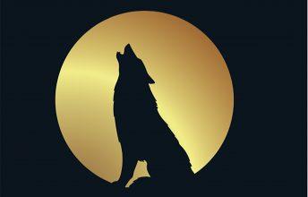 sugar-bull-wolfcry-keine-genre-grenzen-album-review