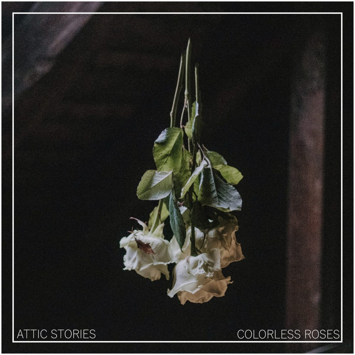 attic-stories-colorless-roses-single-vorstellung